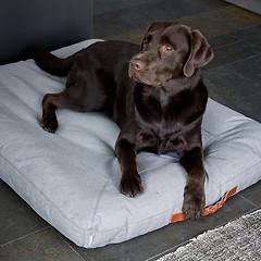 Hundekissen Heather Grey 90 x 120 cm