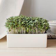Starter-Kit Heimgart Microgreens inkl. 2 Bio Saatpads