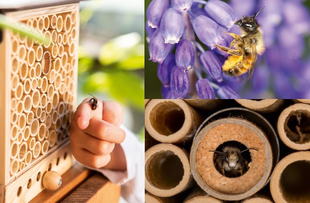 Wildbienenhaus inklusive Startpopulation