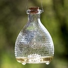 Wespenfalle Bottle